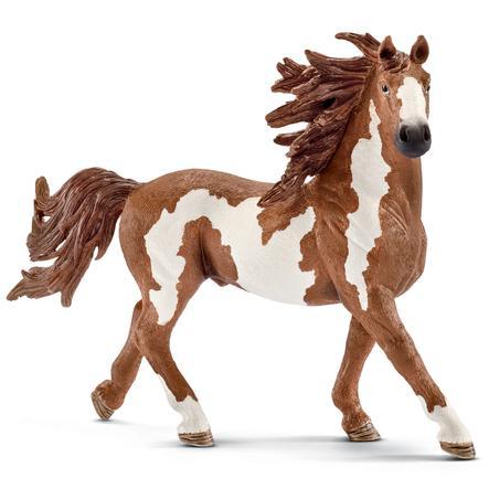 Schleich Figurine étalon Pinto 13794