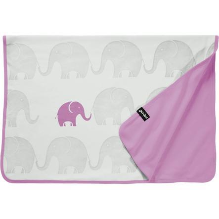 quschel Rodzina słoni sufitowych, rosa