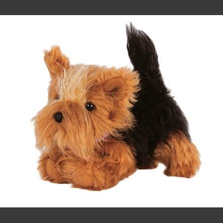 Naše generace - štěně Yorkshire Terrier Cookie
