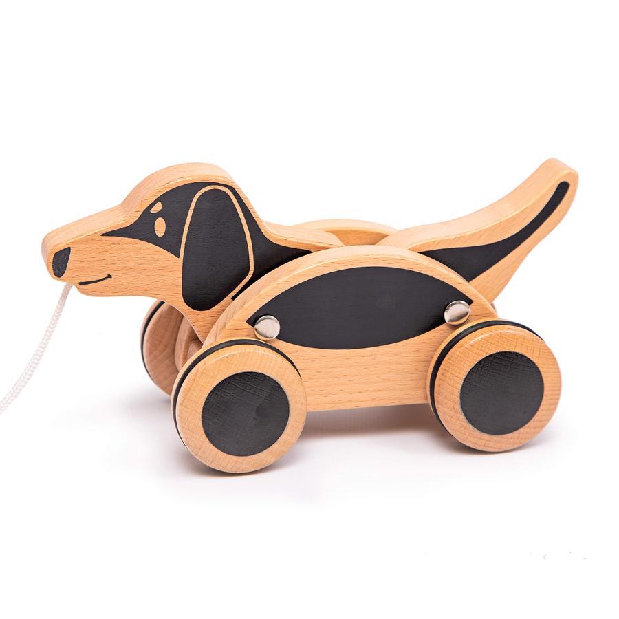 IGGY Nachziehhund - Dachshund